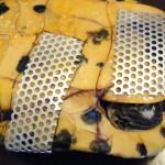 reparierter Panzerbruch Schmuckschildkröte